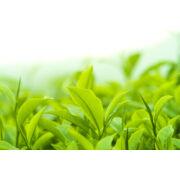Zöldtea kivonat, bio (10ml)