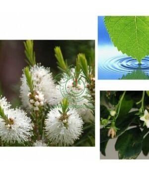 Virágvíz (teafa,100ml)