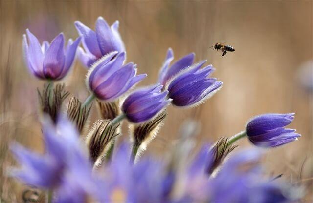 Csodálatos természet fotópályázat