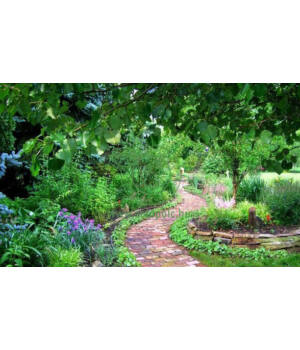 Illatolaj kerti ösvény antiallergén 10ml