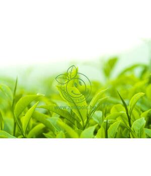 Zöldtea kivonat, bio (100ml)